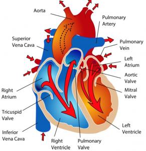 heartcirc