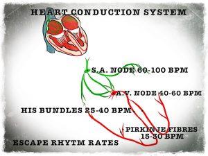 conductionheart
