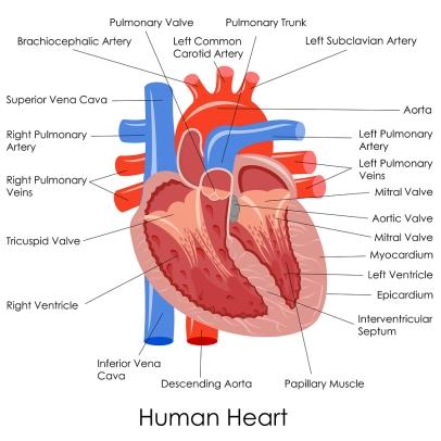 heartap